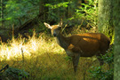 Biche Photo de Pascal Gadroy -
